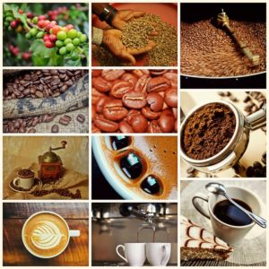 all stages in the life of coffee beans planting, growing, harvesting, roasting, grinding and making